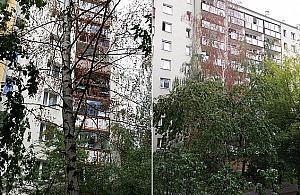 """""""S±siad truje drzewa"""". Mieszkañcy bezradni wobec wycinki"""