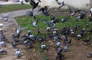 """Awantura o chleb dla ptaków. """"Bo starsi ludzie nie s³uchaj±"""""""