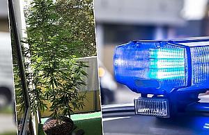 """Policja w mieszkaniu na Bródnie. """"Na balkonie wyhodowa³ krzak"""""""