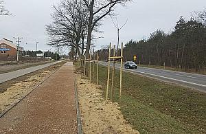Setki martwych drzewek przy Modliñskiej. Kuriozalne wyja¶nienia zarz±dcy drogi