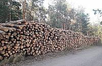 Drzewa masowo choruj�. Lasy Miejskie rozpocz�y wycink� na Bia�o��ce