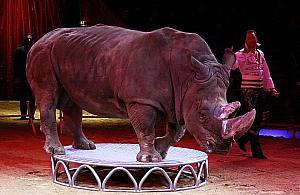 Koniec cyrków ze zwierzêtami. Zostan± zdelegalizowane