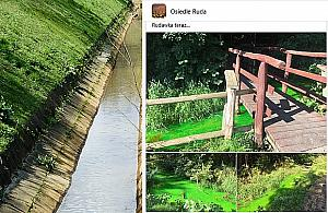 """Zielony kolor rzeki na Bielanach. """"Nie wiemy, co siê tam zdarzy³o"""""""