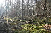 Kochasz spacery po lesie? Zostań przewodnikiem po Mazowieckim Parku Krajobrazowym