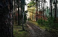 Trwa wycinka w Lesie Br�dnowskim. Drzewni imigranci do usuni�cia