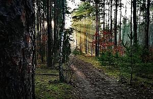Trwa wycinka w Lesie Bródnowskim. Drzewni imigranci do usunięcia