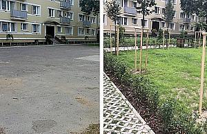 Zieleñ zastêpuje beton. Bielañskie podwórka znów ¿ywe