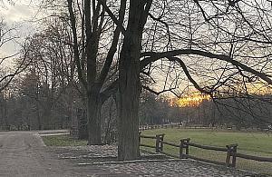 """Lipy w Parku M³ociñskim umieraj±. """"Trzeba dzia³aæ teraz"""""""