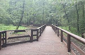 Most w Lesie Bródnowskim gotowy. Rowerzy¶ci mile widziani?