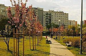 Blok w parku Chomicza? Wraca temat reprywatyzacji
