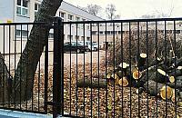 """Drzewa zagra¿a³y ludziom. Aktywi¶ci: """"masakra pi³± mechaniczn±"""""""