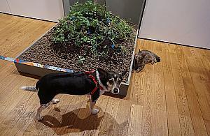 """Pies w muzeum wa¿niejszy od alergika. """"Zdziecinnienie i brak szacunku dla ludzi"""""""