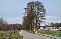 Zdziarska: Drzewa wa¿niejsze od chodnika