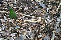 Makabryczne odkrycie za spalarni±. Znale¼li fragment szkieletu