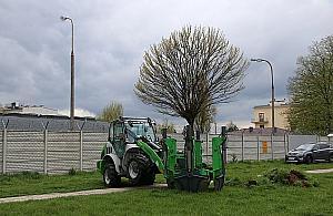 Ruszy³a budowa nowej pêtli. ZTM przesadza drzewa