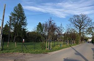 Tu powinien byæ chodnik, ale urzêdnicy posadzili drzewa