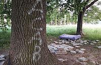"""Oto """"park na Wawrzyszewie"""". Pieni±dze id± na zwê¿enie Sokratesa"""