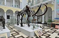 Og³osili konkurs na... imiê mamuta. Szkielet zadziwia od 64 lat