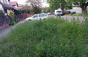 Wola stawia na wysokie trawy. Zadbane trawniki s± niemodne?