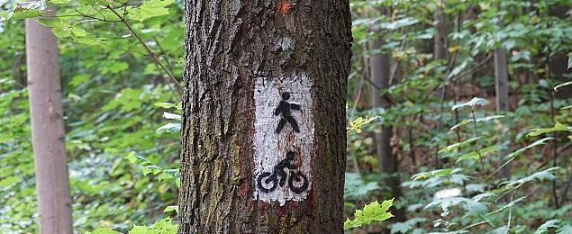 Zmiany w Lesie Bielañskim. Poprawiaj± oznakowanie czy likwiduj± ¶cie¿ki?